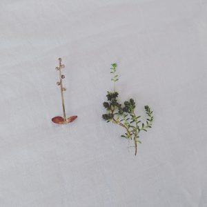 植物ブローチ