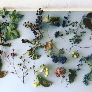 森や野原を散歩途中に見つけたいろんな形の可愛い実たちを集めたマイコレクション