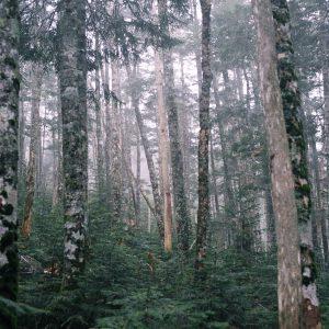 登山中の景色。森の中を歩いている時が好きです。